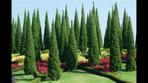 Botanischer Garten Sri Lanka by Royal Botanical Garden Peradeniya Sri Lanka