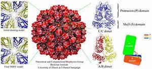 Simple Virus Particle Diagram