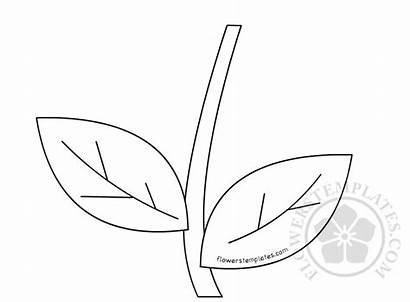 Stem Flower Template Drawing Templates Flowers Pages