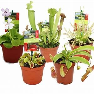 Fleischfressende Pflanze Pflege : schaben joe fleischfressende pflanzen 5er set ~ A.2002-acura-tl-radio.info Haus und Dekorationen