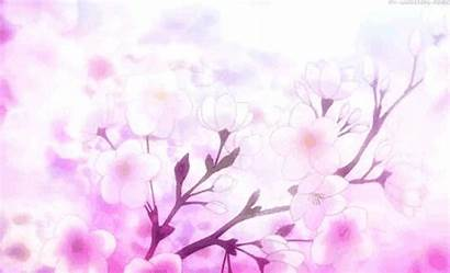Blossom Cherry Sakura Anime Giphy Gifs Everything