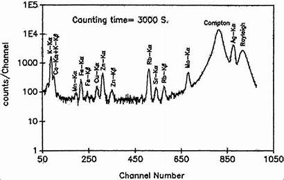 Xrf Spectrum Pulse Carbonized Obtained Typical Sample