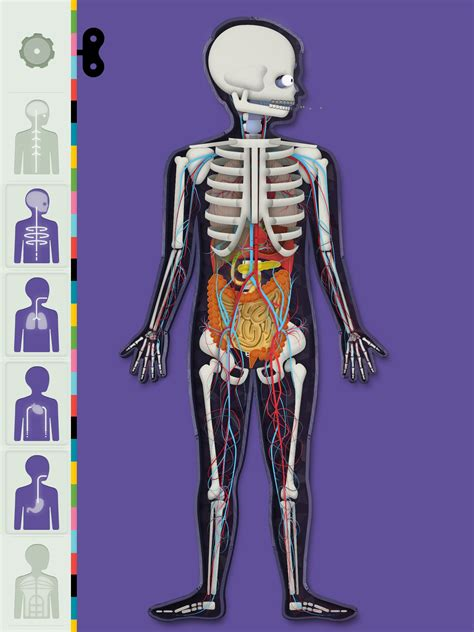 le corps humain par tinybop petitsgeeks fr