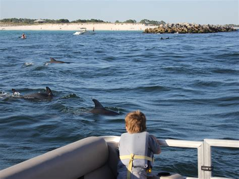 Dolphin Boat Rentals by Panama City Dolphin Tours Boat Rentals 850 238 2484