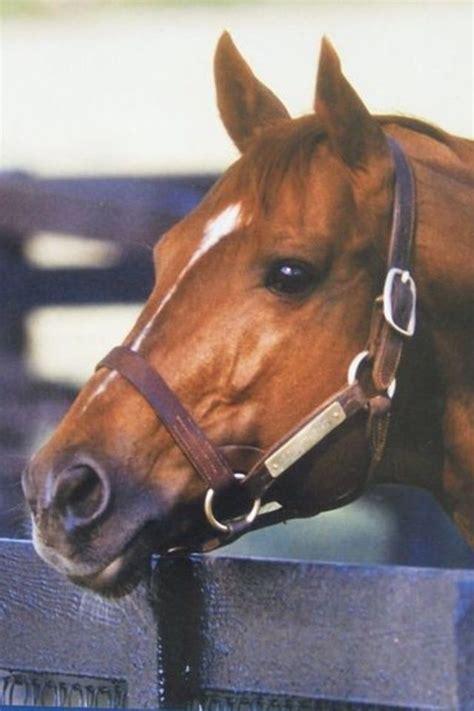 horse fastest secretariat horses race ever record animal stride racing quarter holds incredible still amazing