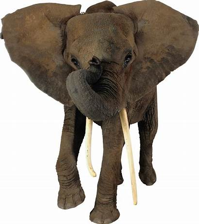 Elephant Transparent African Elephants Elefante Pngimg Elefantes