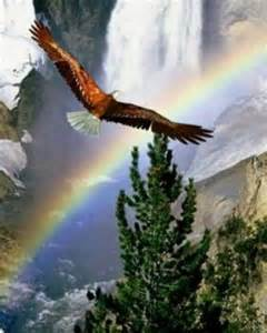 Bald Eagle and Rainbow
