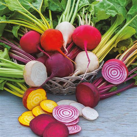 beet color beetroot multi coloured mixed veg seeds from dt brown seeds