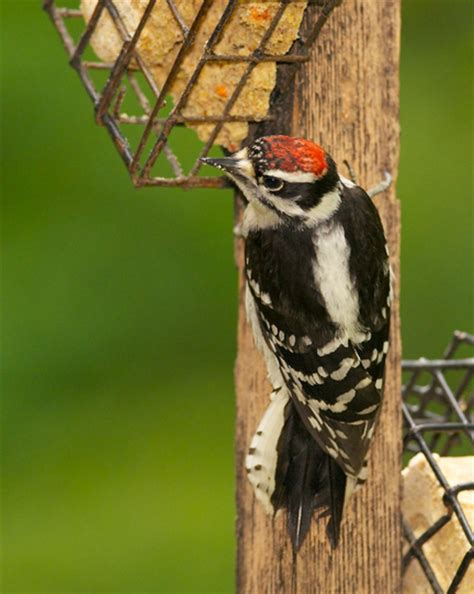 pa birds identification search results global news