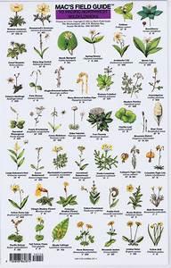 Mac Field Guide Northwest Wildflowers