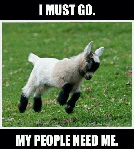 Goat Memes - goat meme i must go my people need me picsmine