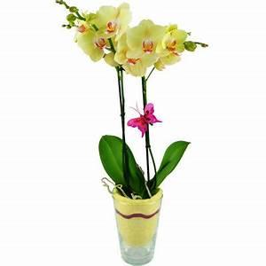 Orchideen Im Glas : gelbe orchidee im glas von bluvesa auf kaufen ~ A.2002-acura-tl-radio.info Haus und Dekorationen