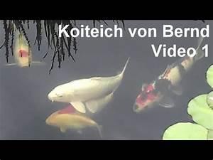 Karpfen Im Gartenteich : koiteich von bernd video 1 koi karpfen im gartenteich ~ Lizthompson.info Haus und Dekorationen