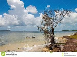 Florida Bay Stock Photo - Image: 49423535
