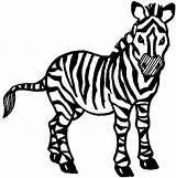 Zebra Coloring Clipart Drawing Clip Animal Animals Draw Colouring Printable Line Head Zebras Drawings Childrens Theatre Graphics Clipartbest Zoo 2211 sketch template