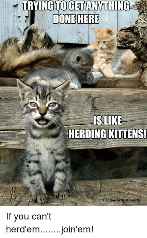 Herding Cats Meme - oget done here is like herding kittens caption by kittyworks if you can t herd emjoin em