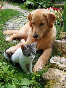 Dogs And Cats Are Typically Right Or Left Pawed