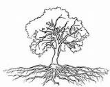 Tree Roots Coloring Outline Oak Clipart Olive Massive Drawing Trees Drawings Pencil Getdrawings Draw Getcolorings Printable Luna Plants Realistic Plant sketch template