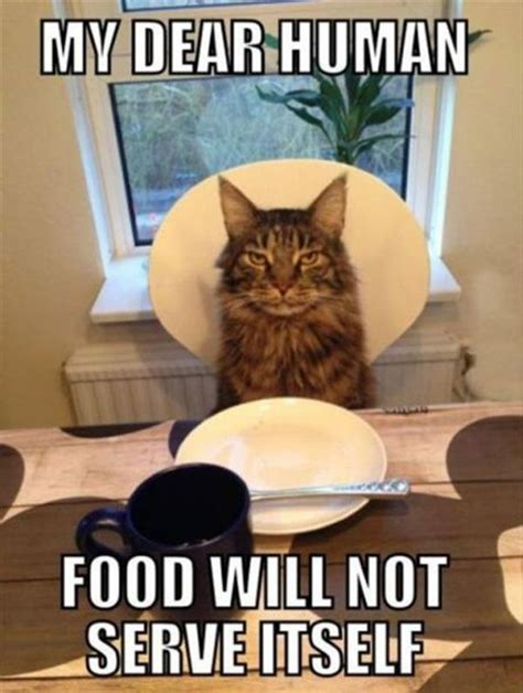 Thanksgiving Cat Meme - 7 cute funny and awesome cat memes for thanksgiving