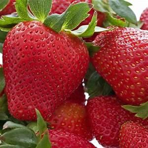 Plant De Fraise : fraisiers tardifs vente de plants de fraises et de ~ Premium-room.com Idées de Décoration