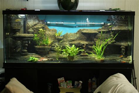 3d aquarium backgrounds 55 gallon 55 gallon tank 55 gal 3d background new build 143611 2017