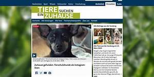 Tiere Suchen Ein Zuhause Instagram : vorhang auf film ab abenteuer wdr dreh verpinscht ~ Watch28wear.com Haus und Dekorationen