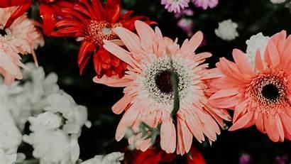Flowers Colorful Bouquet Plants 1080p Bloom Uhd