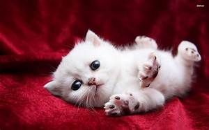 Cute Cats and Kittens Wallpapers - Top Free Cute Cats and ...