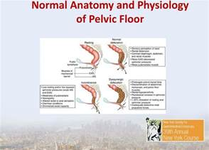 the work up of pelvic floor dyssynergia and fecal incontinence r sam md mph director