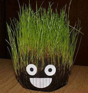 Was Brauchen Pflanzen Zum Wachsen : gr ne fr hlingsboten zum nachbasteln pflanzen magazin pflanzen wundersch n green24 ~ Frokenaadalensverden.com Haus und Dekorationen