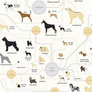 Dog Breed Chart Lovers Breeds - Litle Pups