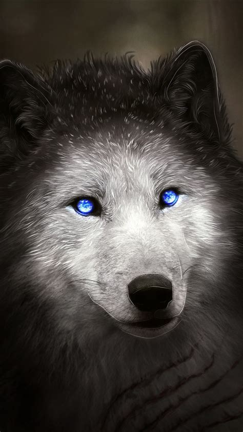 wolf  blue eyes wallpapers hd wallpapers id