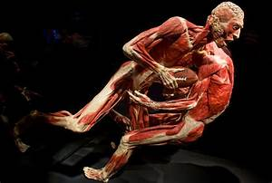 'Body Worlds: Pulse' at Discovery Times Square - The New ...