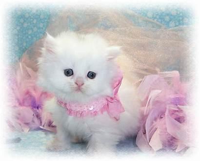 Cats Wallpapers Cat Sweet Wallpaper202 Kitty Kitten