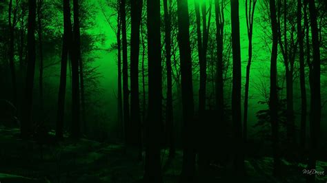Free Green Forest Background by Forest Green Wallpaper 69 Pictures