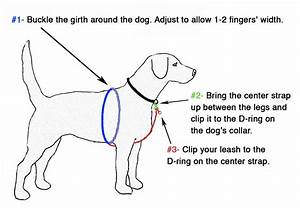 How To Put On A Dog Harness Diagram
