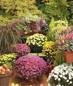 Die Schönsten Balkonpflanzen : beliebte herbstblumen f r balkon 11 balkonbepflanzung ideen ~ Markanthonyermac.com Haus und Dekorationen