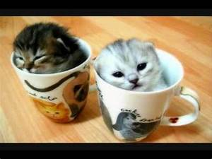 super cute kittens and bears - YouTube