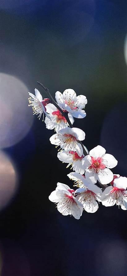 Iphone Flower Spring Sakura Happy Tree Nature