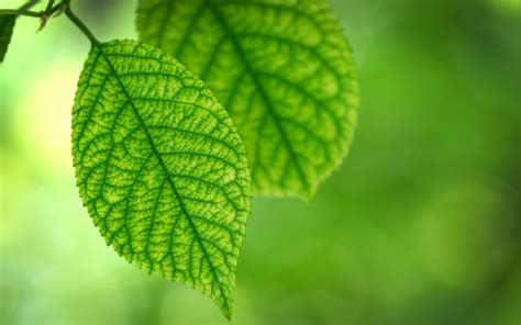plants, Bokeh, Leaves, Nature, Macro Wallpapers HD ...
