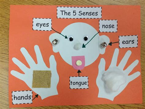 our five senses craftivity preschool 621 | 73ec0cf016686b357053018bb9ff2dad