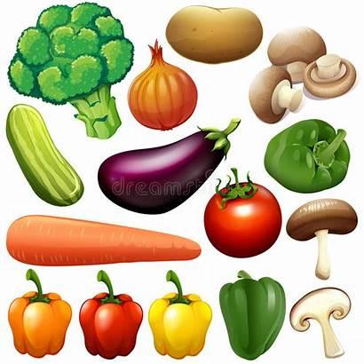 Vegetables Different Clipart Fresh Kind Veggies Illustration