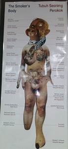 The Anatomy Of A Smoker U0026 39 S Body