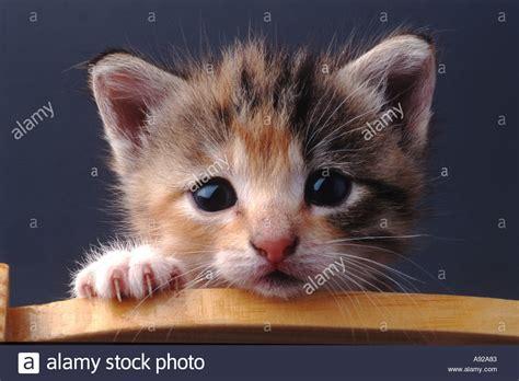 baby tiere katze k 228 tzchen katzen k 228 tzchen im freien tier inl 228 ndischen haustier zoologie