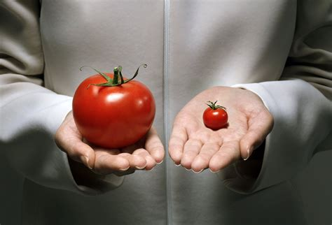 Modification Genetic Organisms by Gmos And Evolution Genetically Modified Organisms