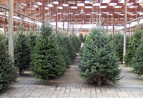 Weihnachtsbaum Nach Dem Fest