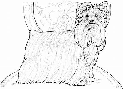 Coloring Dog Pages Terrier Catcher Pound Template