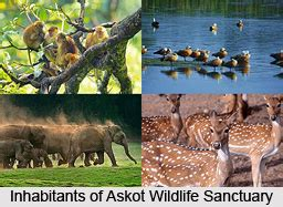 askot wildlife sanctuary uttarakhand