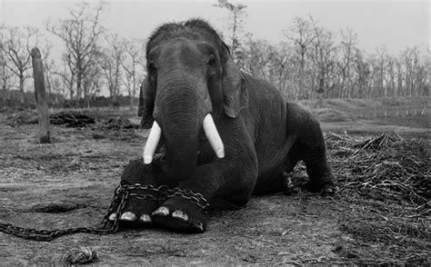 asias illegal animal trade  estimated   worth