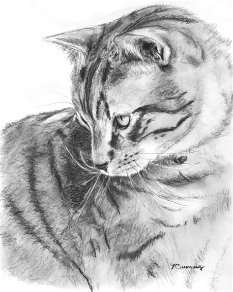 Tabby Cat In Profile Drawing Drawing By Kate Sumners
